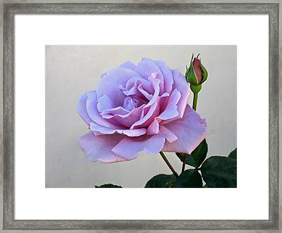 Sterling Silver Framed Print by Jay Milo