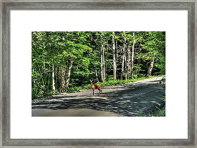 Sterling Valley Doe Framed Print