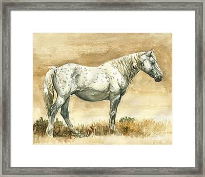 Sterling Wild Stallion Of Sand Wash Basin Framed Print