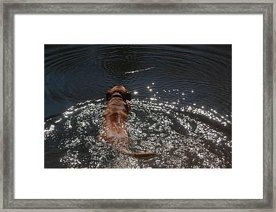Stick Framed Print by Mim White