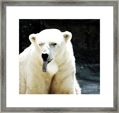 Stick Out Your Tongue Framed Print by Kathleen Struckle