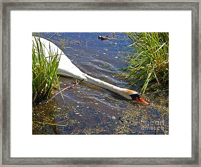 Sticking His Neck Out Framed Print by Ann Horn