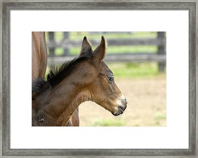 Framed Print featuring the photograph Sticking To Mom by Sami Martin