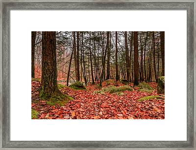 Stickney Brook Leaves Framed Print