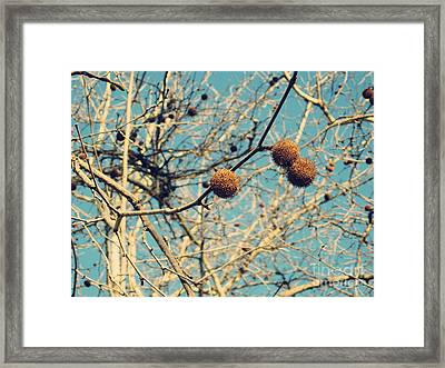 Sticks And Pods Framed Print