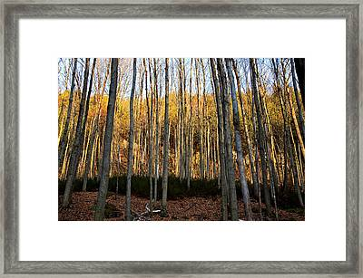 Sticks Framed Print by Mike Feraco