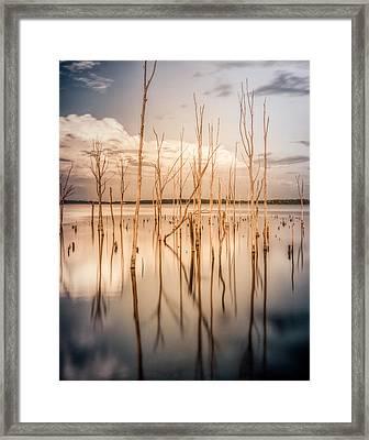 Sticks Framed Print by Steve Stanger