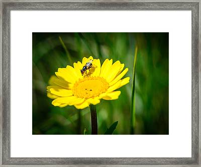Sticky Fingers II Framed Print by Marco Oliveira