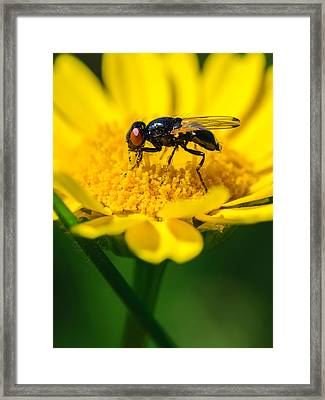 Sticky Fingers Framed Print by Marco Oliveira