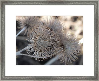 Framed Print featuring the photograph Sticky Stuff by Gene Cyr