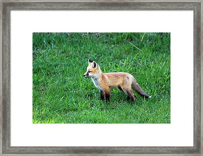 Still A Pup Framed Print