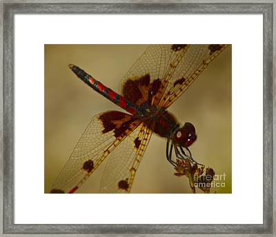 Framed Print featuring the photograph Still by Alice Mainville