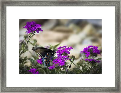 Still Beautiful Swallowtail Framed Print