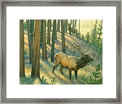 Still Champiion Framed Print by Paul Krapf