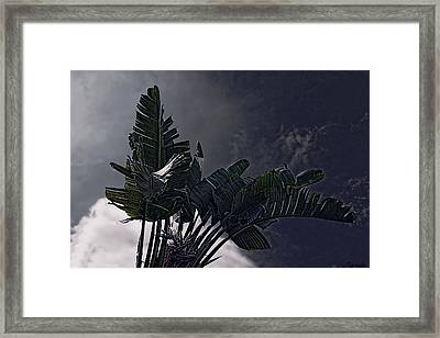 Framed Print featuring the photograph Banana Tree -still In A Storm #3  by Renee Anderson