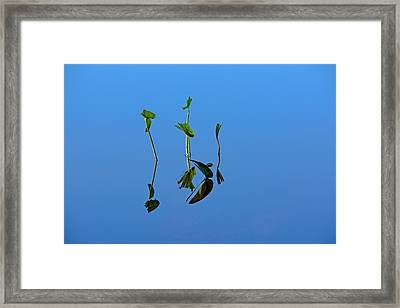 Still Framed Print