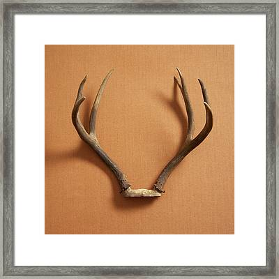Still Life Of Deer Antlers On A Fabric Framed Print by Gwen Rodgers