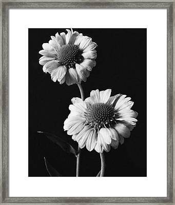 Still Life Of Flowers Framed Print by J. Horace McFarland