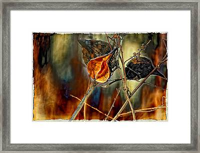 Still Life Study Framed Print by Steve Harrington