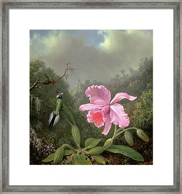 Still Life With An Orchid And A Pair Of Hummingbirds Framed Print by Martin Johnson Heade