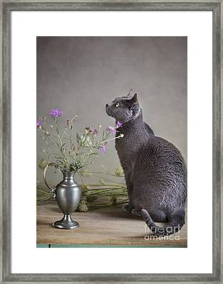 Still Life With Cat Framed Print by Nailia Schwarz