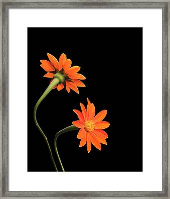 Framed Print featuring the photograph Still Life With Flowers by Krasimir Tolev