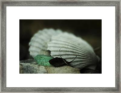 Still Life With Fossil Shells And Beach Glass Framed Print by Rebecca Sherman