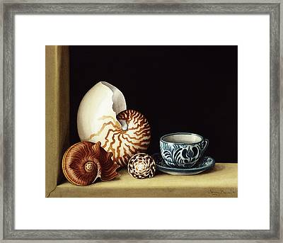 Still Life With Nautilus Framed Print