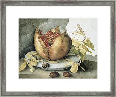 Still Life With Open Pomegranate Framed Print