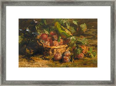 Still Life With Plums In A Basket Framed Print