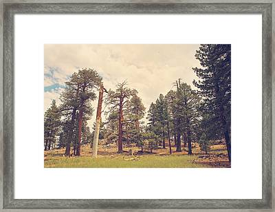 Still Proud Framed Print by Laurie Search