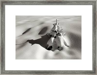 Still Standing Framed Print by Colleen Williams
