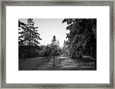 Still Standing In The Winter Sunset Bw Framed Print