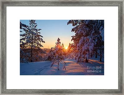 Still Standing In The Winter Sunset Framed Print
