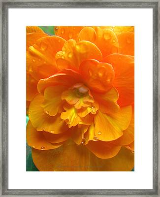 Still The One - Images From The Garden Framed Print
