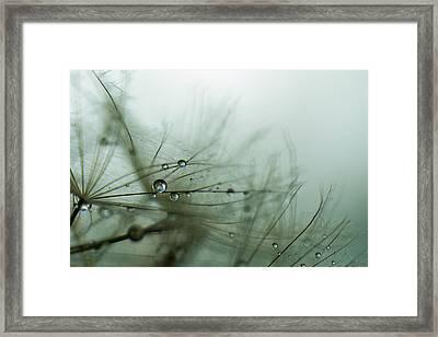 Stillness Framed Print by Eiwy Ahlund
