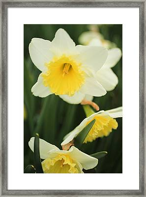 Framed Print featuring the photograph Stillness by Julie Andel