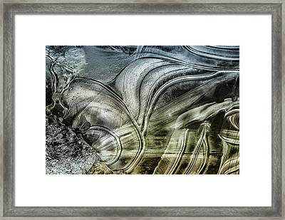Sting Ray Framed Print