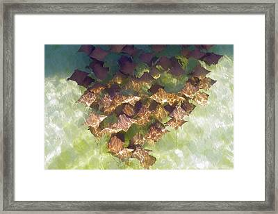 Framed Print featuring the photograph Stingrays At Navarre Beach In Florida by Teresa Schomig