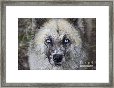 Stinky  Framed Print by Tim Rice