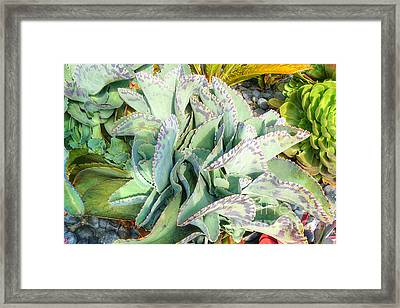 Stippled Cactus Framed Print by Deborah Smolinske