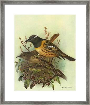 Stitchbird Framed Print by Rob Dreyer