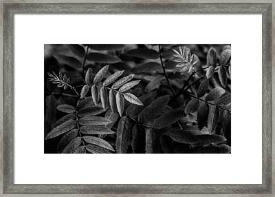 Stitches Framed Print by Matti Ollikainen
