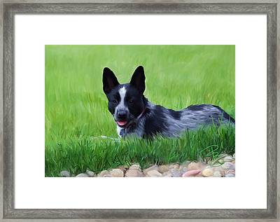 Stock Dog Named Brook Framed Print by Debra Baldwin