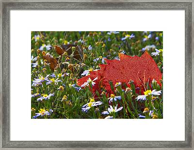 Framed Print featuring the photograph Stocking Up For The Winter by Gary Holmes