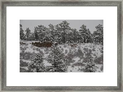 Stockpiled Warmth Framed Print by Harry Strharsky