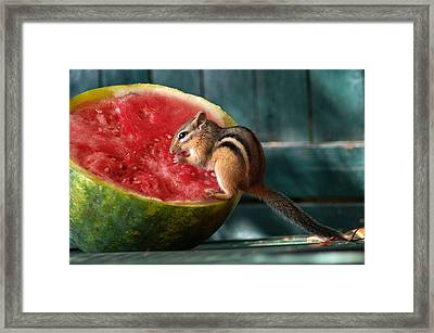 Stolen Lunch Framed Print