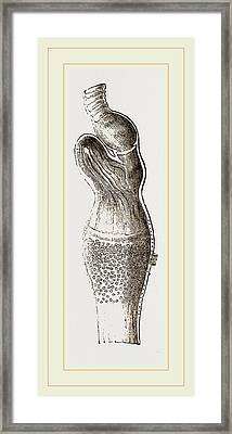 Stomach Of Emeu Framed Print by Litz Collection
