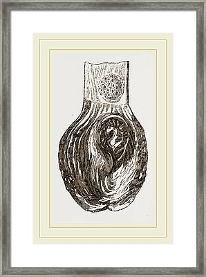 Stomach Of Nanclu Framed Print by Litz Collection