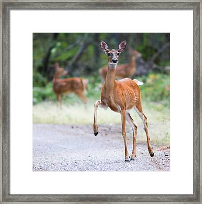 Stomp Framed Print by Aaron Aldrich